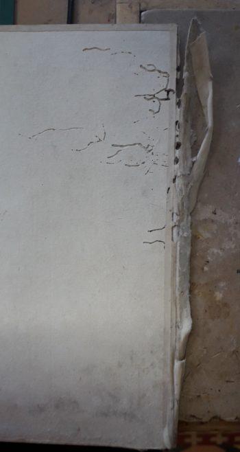 Carton endommagé par des lépismes (avant)